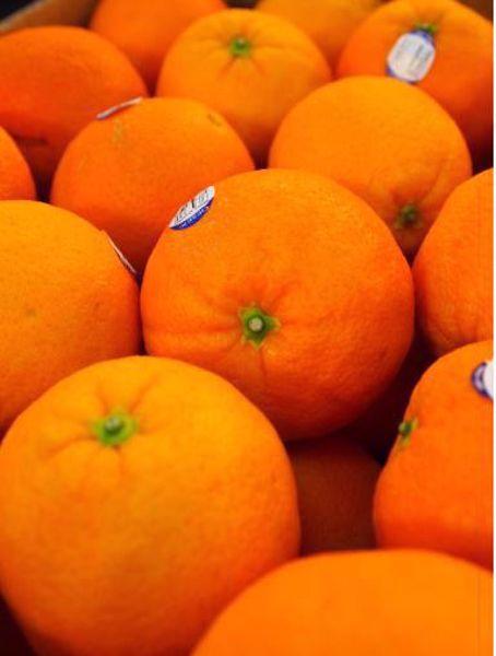 [한국청과] 발렌시아 오렌지(미국산)  2kg