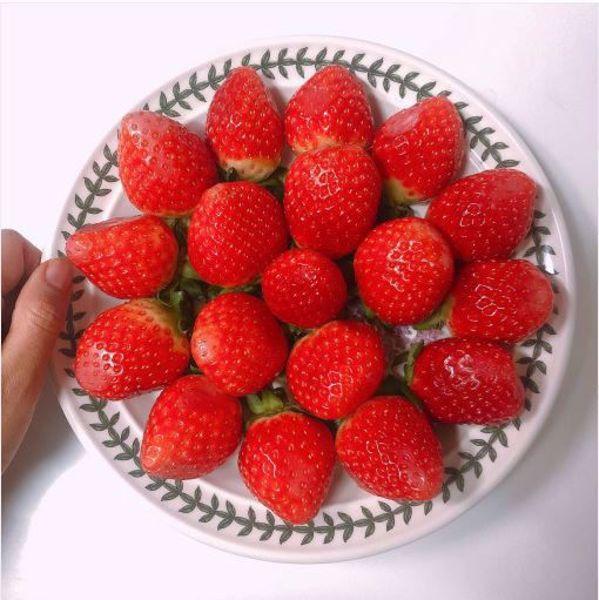 [한국청과] 싱싱 딸기  2kg / 500g X 4팩